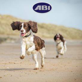 ABI-dogs